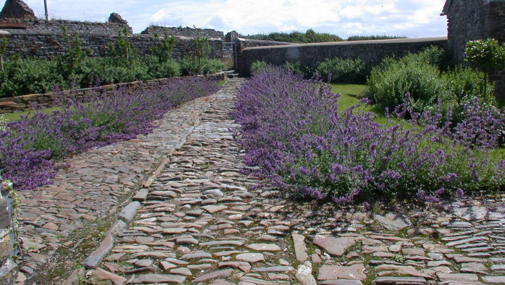 The cobbled pathway and lavender walk in the walled garden at Berry House in Devon